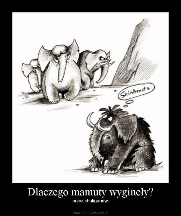 Dlaczego mamuty wygineły? – przez chuliganów.