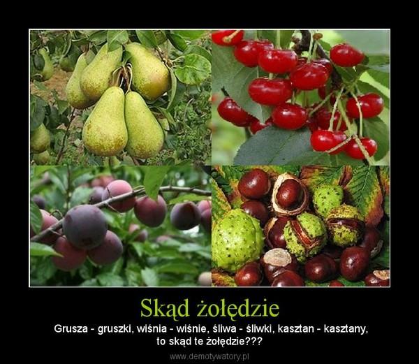 Skąd żołędzie – Grusza - gruszki, wiśnia - wiśnie, śliwa - śliwki, kasztan - kasztany,to skąd te żołędzie???