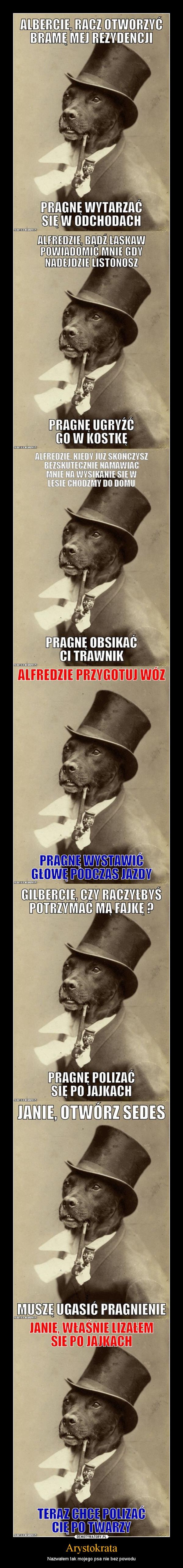 Arystokrata – Nazwałem tak mojego psa nie bez powodu