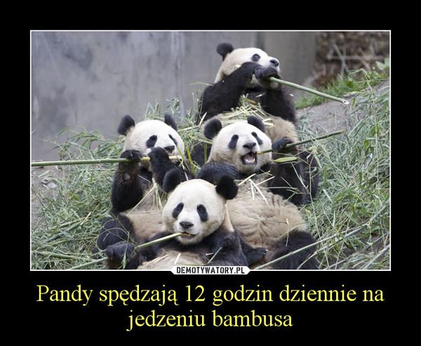 Pandy spędzają 12 godzin dziennie na jedzeniu bambusa –