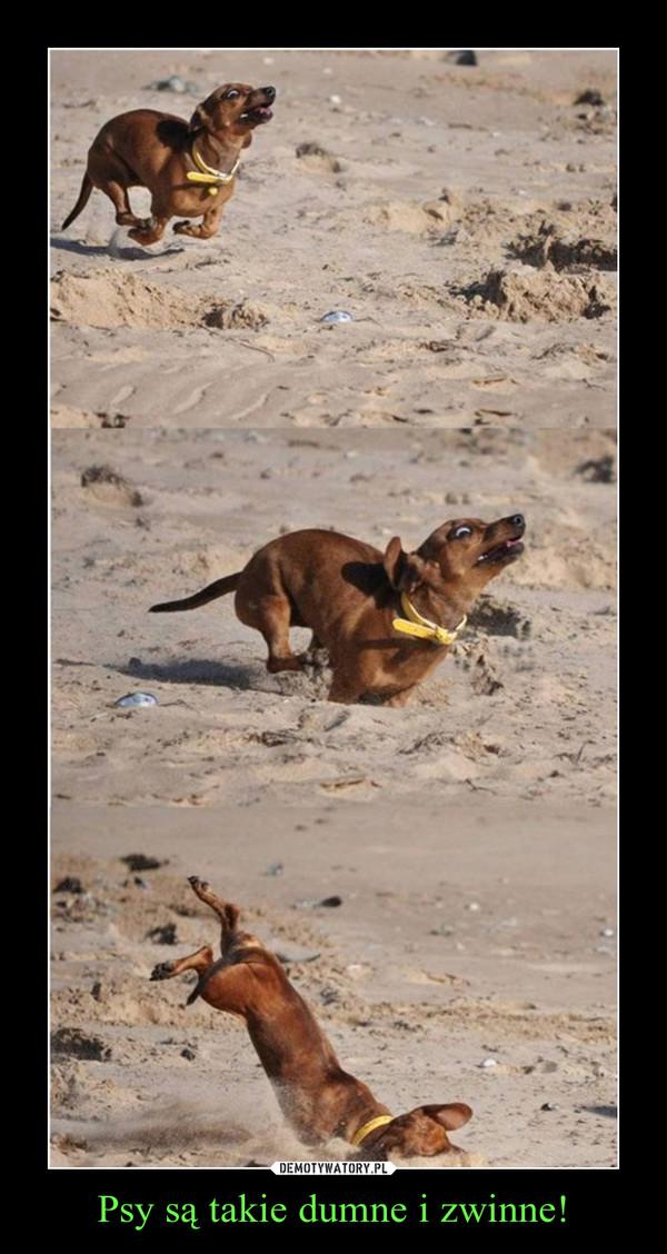Psy są takie dumne i zwinne! –