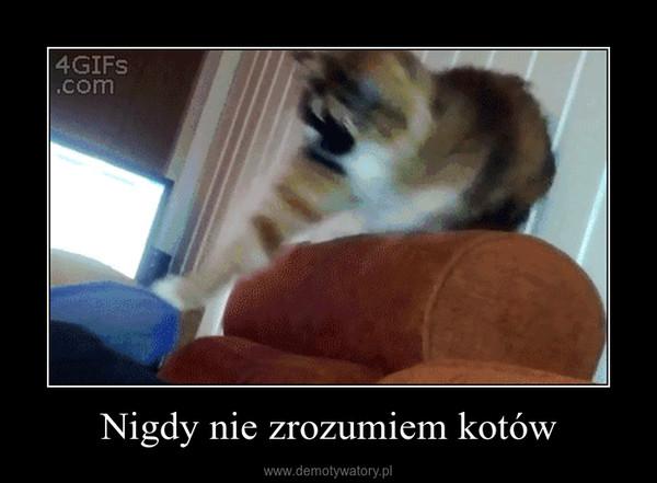 Nigdy nie zrozumiem kotów –