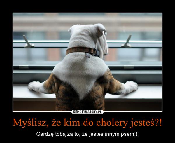 Myślisz, że kim do cholery jesteś?! – Gardzę tobą za to, że jesteś innym psem!!!
