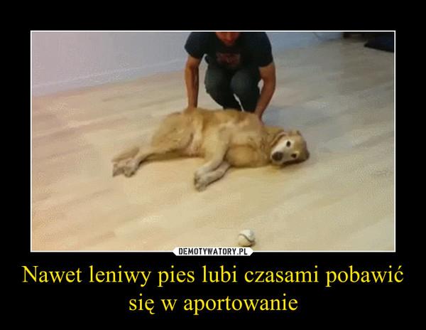 Nawet leniwy pies lubi czasami pobawić się w aportowanie –
