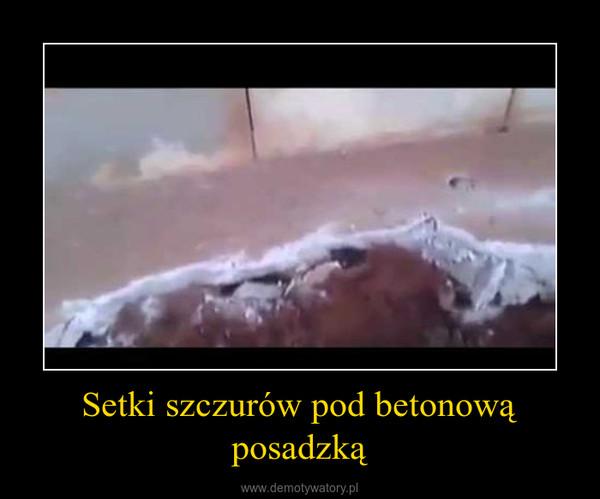 Setki szczurów pod betonową posadzką –