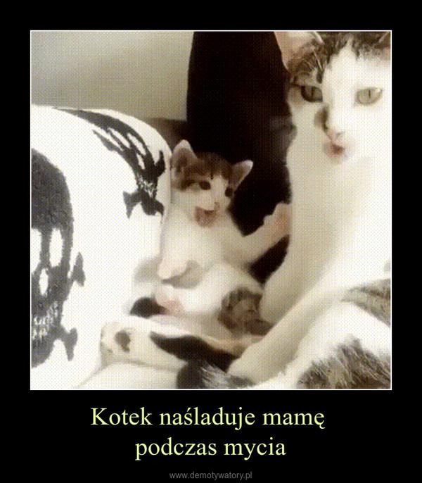 Kotek naśladuje mamę podczas mycia –
