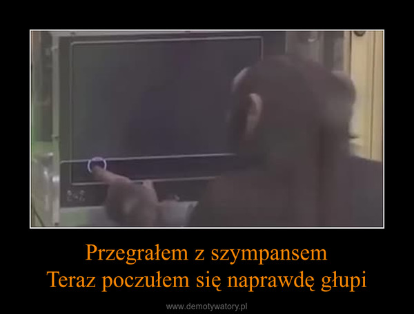 Przegrałem z szympansemTeraz poczułem się naprawdę głupi –