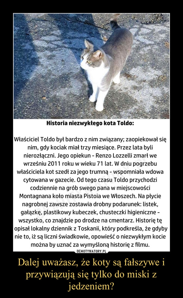 Dalej uważasz, że koty są fałszywe i przywiązują się tylko do miski z jedzeniem? –  Historia niezwykłego kota Toldo:Właściciel Toldo był bardzo z nim związany; zaopiekował się nim, gdy kociak miał trzy miesiące. Przez lata byli nierozłączni. Jego opiekun - Renzo Lozzelli zmarł we wrześniu 2011 roku w wieku 71 lat. W dniu pogrzebu właściciela kot szedł za jego trumną - wspomniała wdowa cytowana w gazecie. Od tego czasu Toldo przychodzi codziennie na grób swego pana w miejscowości Montagnana koło miasta Pistoia we Włoszech. Na płycie nagrobnej zawsze zostawia drobny podarunek: listek, gałązkę, plastikowy kubeczek, chusteczki higieniczne - wszystko, co znajdzie po drodze na cmentarz. Historię tę opisał lokalny dziennik zToskanii, który podkreśla, że gdyby nie to, iż są liczni świadkowie, opowieść o niezwykłym kocie można by uznać za wymyśloną historię z filmu.