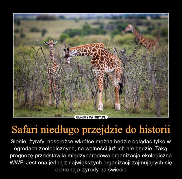 Safari niedługo przejdzie do historii – Słonie, żyrafy, nosorożce wkrótce można będzie oglądać tylko w ogrodach zoologicznych, na wolności już ich nie będzie. Taką prognozę przedstawiła międzynarodowa organizacja ekologiczna WWF. Jest ona jedną z największych organizacji zajmujących się ochroną przyrody na świecie