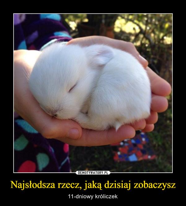 Najsłodsza rzecz, jaką dzisiaj zobaczysz – 11-dniowy króliczek
