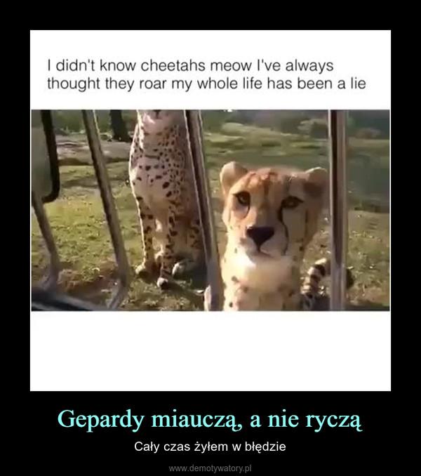 Gepardy miauczą, a nie ryczą – Cały czas żyłem w błędzie