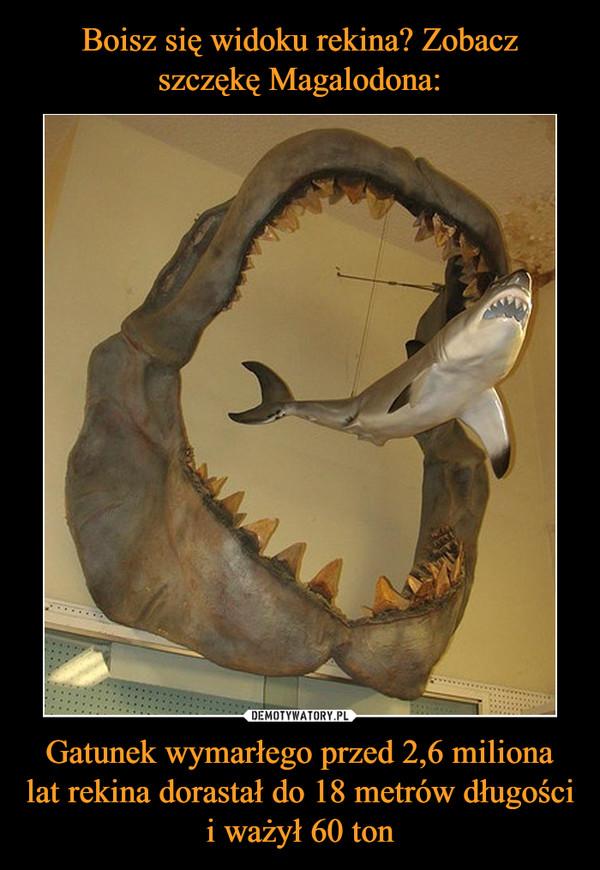 Gatunek wymarłego przed 2,6 miliona lat rekina dorastał do 18 metrów długości i ważył 60 ton –