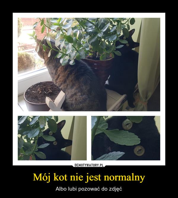 Mój kot nie jest normalny – Albo lubi pozować do zdjęć