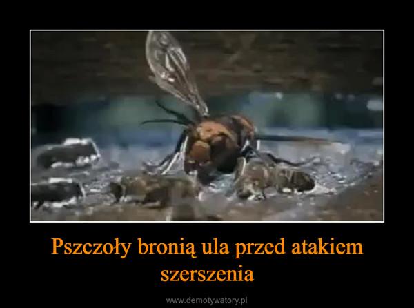 Pszczoły bronią ula przed atakiem szerszenia –