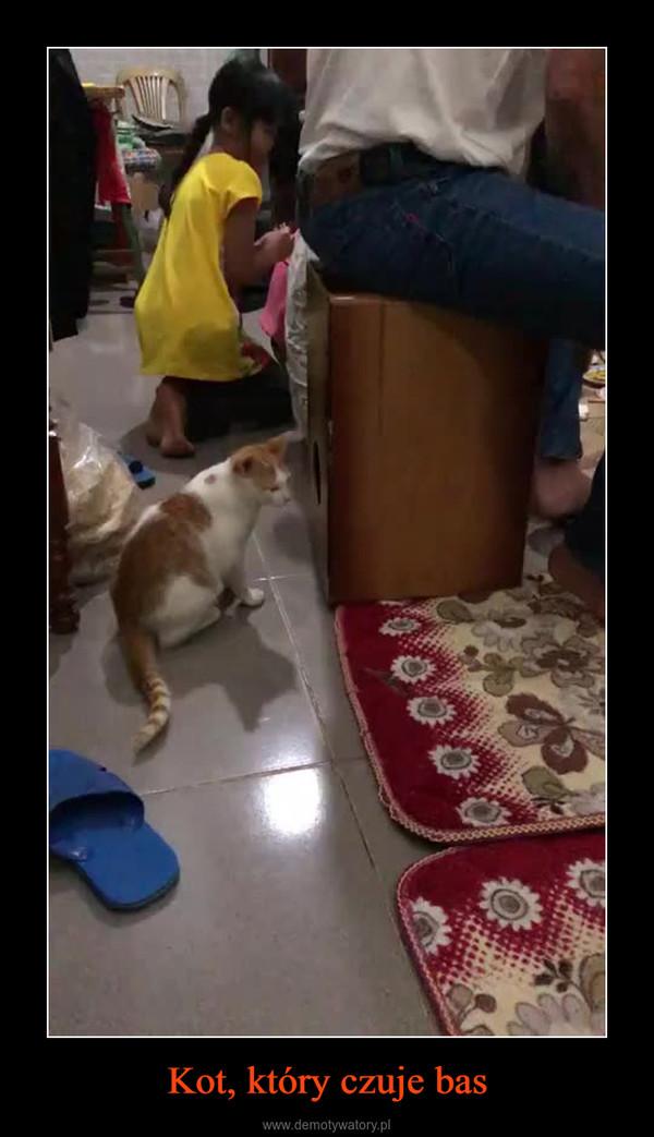 Kot, który czuje bas –