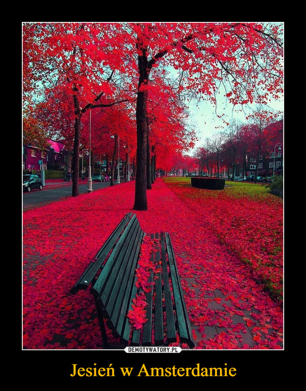 Jesień w Amsterdamie –