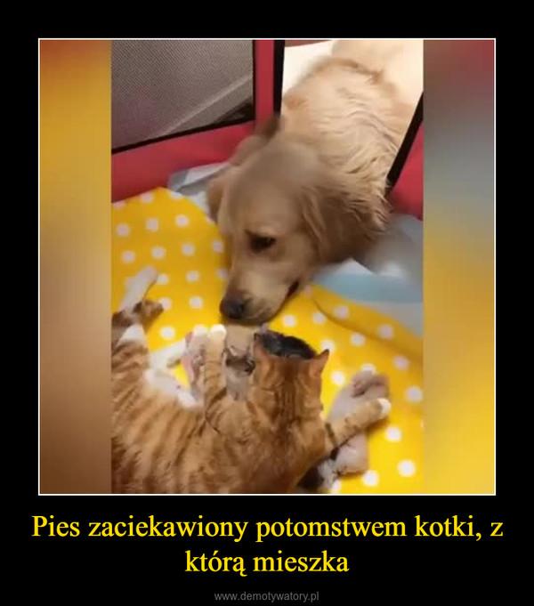 Pies zaciekawiony potomstwem kotki, z którą mieszka –