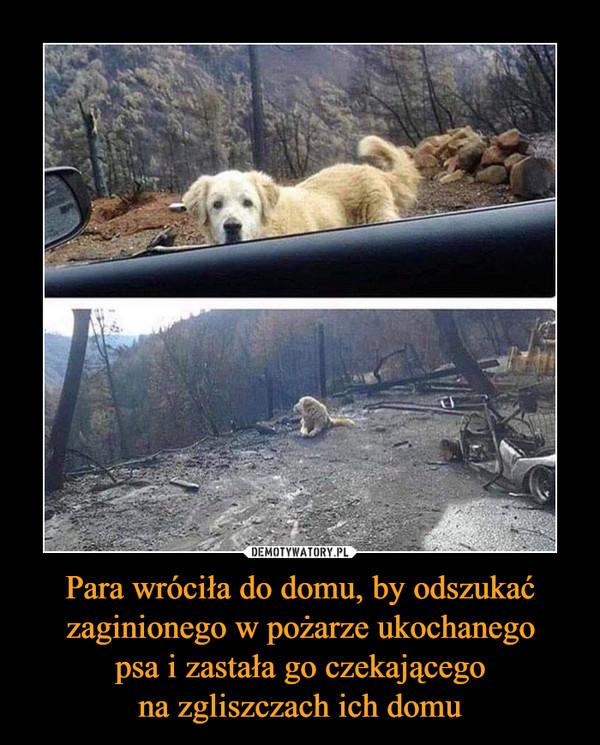 Para wróciła do domu, by odszukać zaginionego w pożarze ukochanegopsa i zastała go czekającegona zgliszczach ich domu –