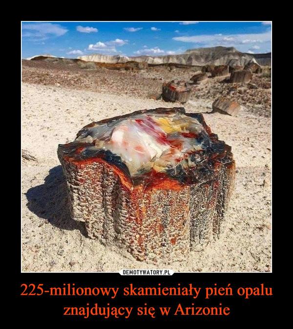 225-milionowy skamieniały pień opalu znajdujący się w Arizonie –