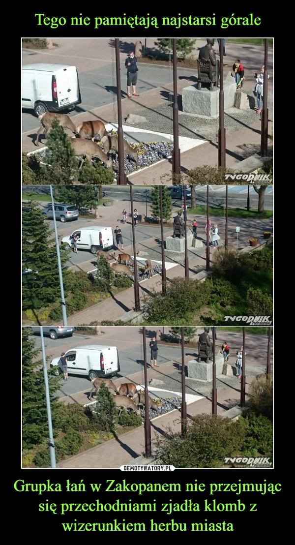 Grupka łań w Zakopanem nie przejmując się przechodniami zjadła klomb z wizerunkiem herbu miasta –