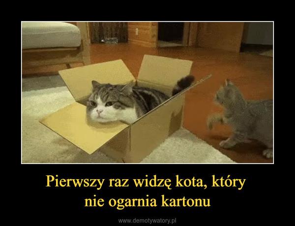 Pierwszy raz widzę kota, który nie ogarnia kartonu –