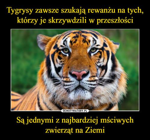 Tygrysy zawsze szukają rewanżu na tych, którzy je skrzywdzili w przeszłości Są jednymi z najbardziej mściwych zwierząt na Ziemi