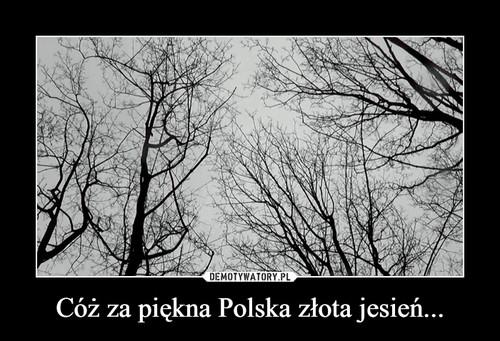 Cóż za piękna Polska złota jesień...
