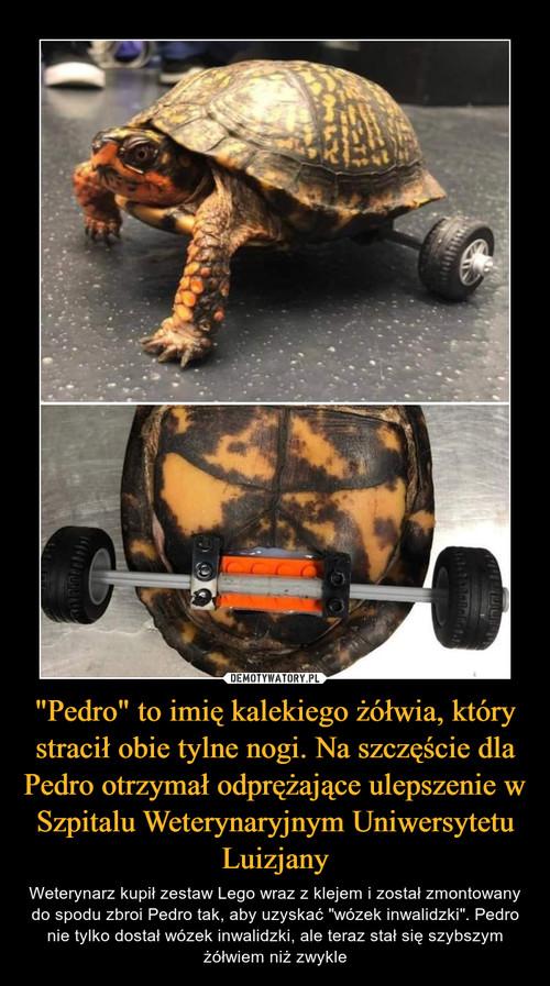 """""""Pedro"""" to imię kalekiego żółwia, który stracił obie tylne nogi. Na szczęście dla Pedro otrzymał odprężające ulepszenie w Szpitalu Weterynaryjnym Uniwersytetu Luizjany"""