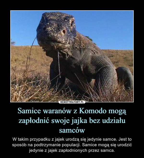 Samice waranów z Komodo mogą zapłodnić swoje jajka bez udziału samców – W takim przypadku z jajek urodzą się jedynie samce. Jest to sposób na podtrzymanie populacji. Samice mogą się urodzić jedynie z jajek zapłodnionych przez samca.