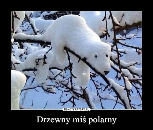 Drzewny miś polarny