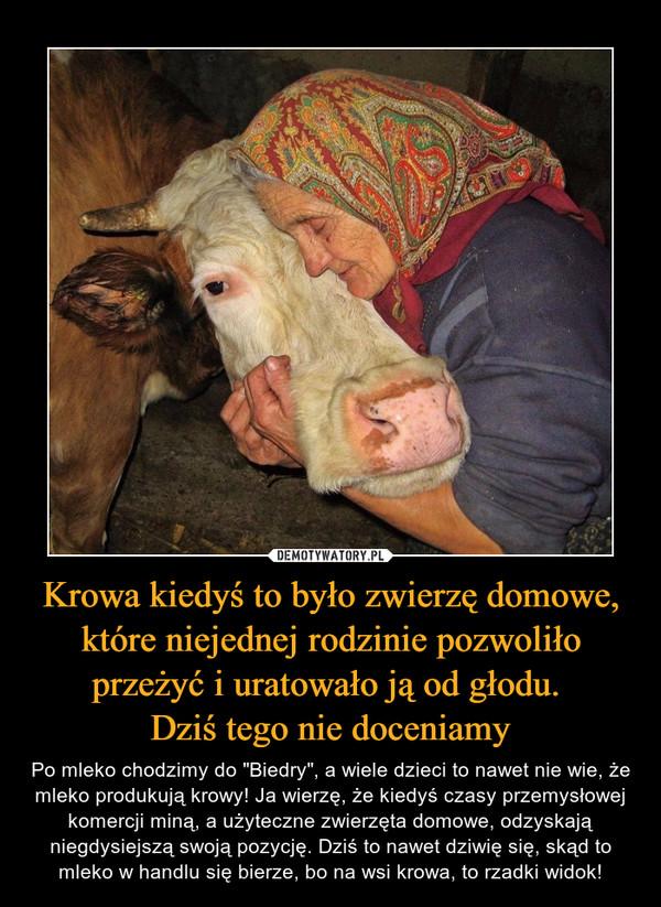 """Krowa kiedyś to było zwierzę domowe, które niejednej rodzinie pozwoliło przeżyć i uratowało ją od głodu. Dziś tego nie doceniamy – Po mleko chodzimy do """"Biedry"""", a wiele dzieci to nawet nie wie, że mleko produkują krowy! Ja wierzę, że kiedyś czasy przemysłowej komercji miną, a użyteczne zwierzęta domowe, odzyskają niegdysiejszą swoją pozycję. Dziś to nawet dziwię się, skąd to mleko w handlu się bierze, bo na wsi krowa, to rzadki widok!"""