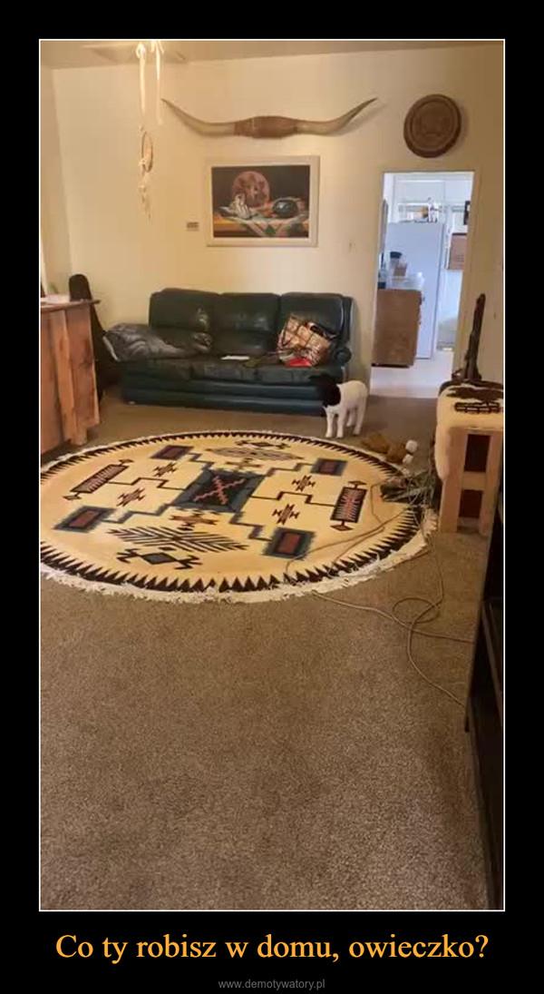 Co ty robisz w domu, owieczko? –