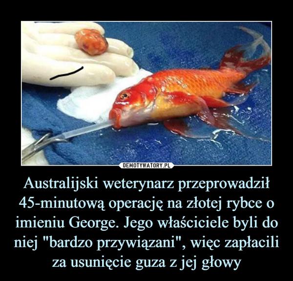 """Australijski weterynarz przeprowadził 45-minutową operację na złotej rybce o imieniu George. Jego właściciele byli do niej """"bardzo przywiązani"""", więc zapłacili za usunięcie guza z jej głowy –"""