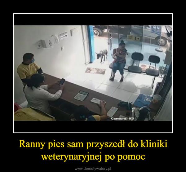 Ranny pies sam przyszedł do kliniki weterynaryjnej po pomoc –