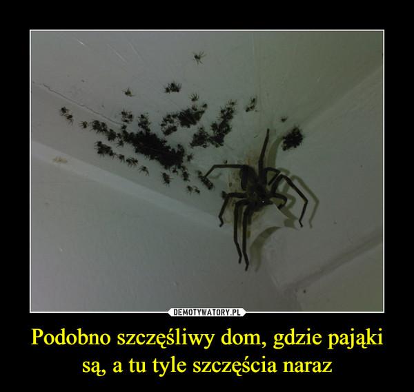 Podobno szczęśliwy dom, gdzie pająki są, a tu tyle szczęścia naraz –