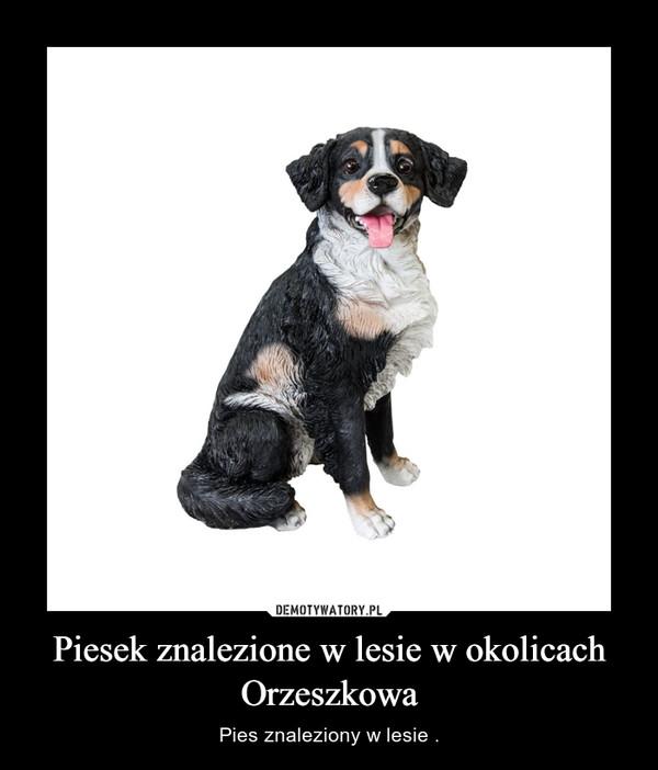 Piesek znalezione w lesie w okolicach Orzeszkowa – Pies znaleziony w lesie .