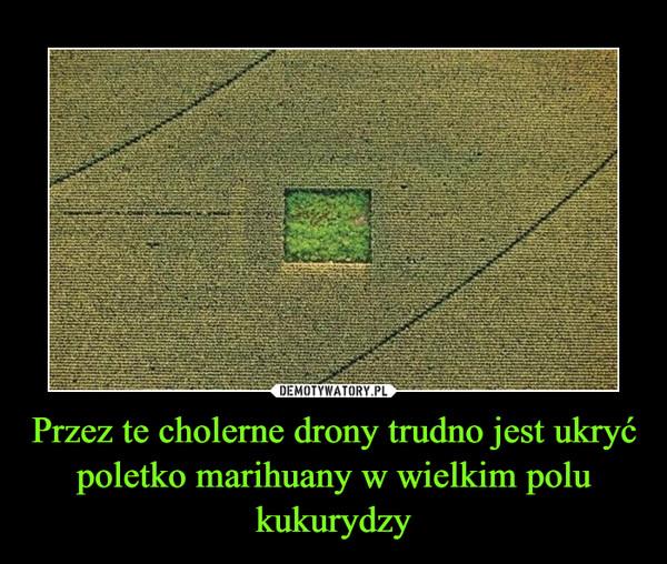 Przez te cholerne drony trudno jest ukryć poletko marihuany w wielkim polu kukurydzy –