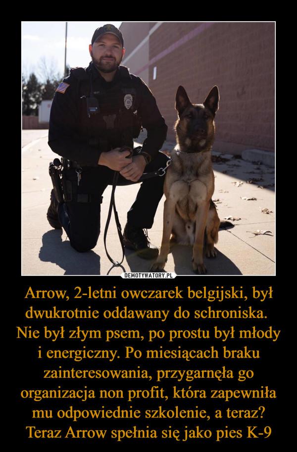 Arrow, 2-letni owczarek belgijski, był dwukrotnie oddawany do schroniska. Nie był złym psem, po prostu był młody i energiczny. Po miesiącach braku zainteresowania, przygarnęła go organizacja non profit, która zapewniła mu odpowiednie szkolenie, a teraz? Teraz Arrow spełnia się jako pies K-9 –
