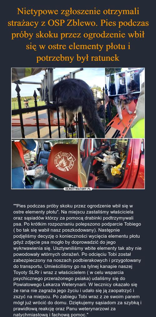 Nietypowe zgłoszenie otrzymali strażacy z OSP Zblewo. Pies podczas próby skoku przez ogrodzenie wbił się w ostre elementy płotu i potrzebny był ratunek