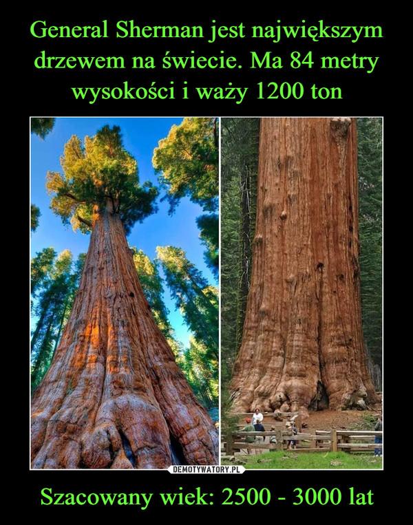 General Sherman jest największym drzewem na świecie. Ma 84 metry wysokości i waży 1200 ton Szacowany wiek: 2500 - 3000 lat