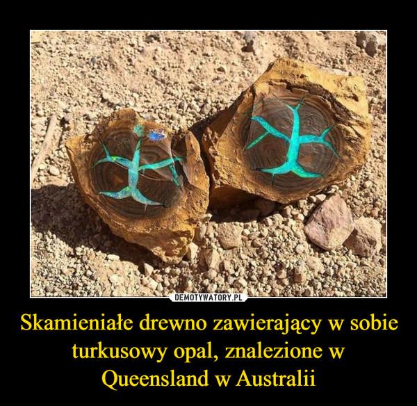 Skamieniałe drewno zawierający w sobie turkusowy opal, znalezione w Queensland w Australii –