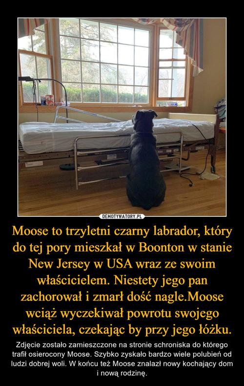 Moose to trzyletni czarny labrador, który do tej pory mieszkał w Boonton w stanie New Jersey w USA wraz ze swoim właścicielem. Niestety jego pan zachorował i zmarł dość nagle.Moose wciąż wyczekiwał powrotu swojego właściciela, czekając by przy jego łóżku.