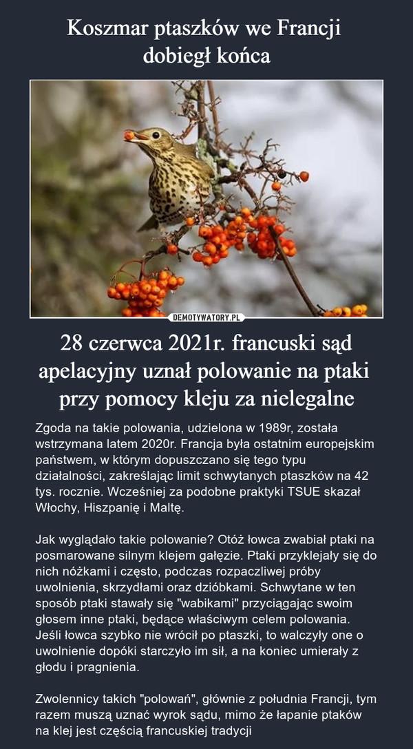 """28 czerwca 2021r. francuski sąd apelacyjny uznał polowanie na ptaki przy pomocy kleju za nielegalne – Zgoda na takie polowania, udzielona w 1989r, została wstrzymana latem 2020r. Francja była ostatnim europejskim państwem, w którym dopuszczano się tego typu działalności, zakreślając limit schwytanych ptaszków na 42 tys. rocznie. Wcześniej za podobne praktyki TSUE skazał Włochy, Hiszpanię i Maltę.Jak wyglądało takie polowanie? Otóż łowca zwabiał ptaki na posmarowane silnym klejem gałęzie. Ptaki przyklejały się do nich nóżkami i często, podczas rozpaczliwej próby uwolnienia, skrzydłami oraz dzióbkami. Schwytane w ten sposób ptaki stawały się """"wabikami"""" przyciągając swoim głosem inne ptaki, będące właściwym celem polowania. Jeśli łowca szybko nie wrócił po ptaszki, to walczyły one o uwolnienie dopóki starczyło im sił, a na koniec umierały z głodu i pragnienia. Zwolennicy takich """"polowań"""", głównie z południa Francji, tym razem muszą uznać wyrok sądu, mimo że łapanie ptaków na klej jest częścią francuskiej tradycji"""