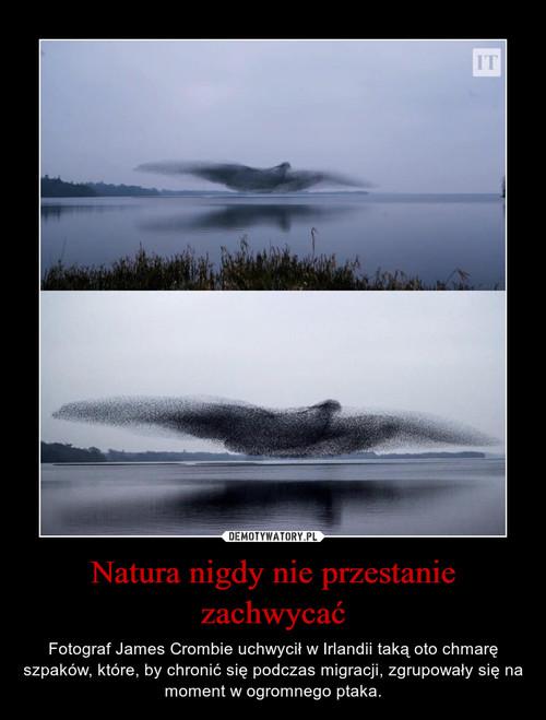Natura nigdy nie przestanie zachwycać
