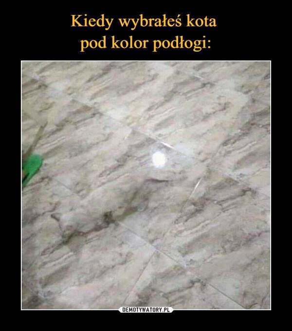 Kiedy wybrałeś kota  pod kolor podłogi: