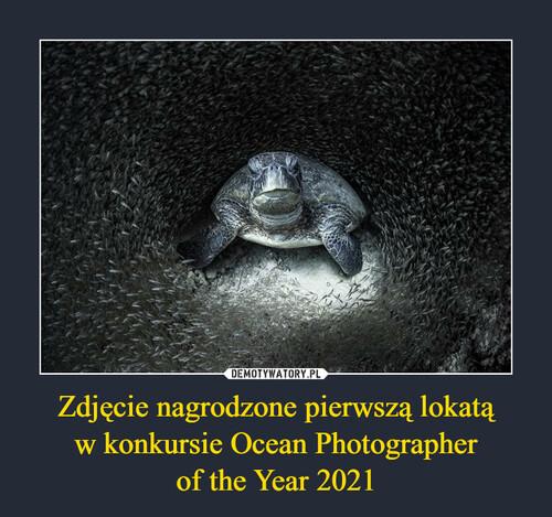Zdjęcie nagrodzone pierwszą lokatą w konkursie Ocean Photographer of the Year 2021