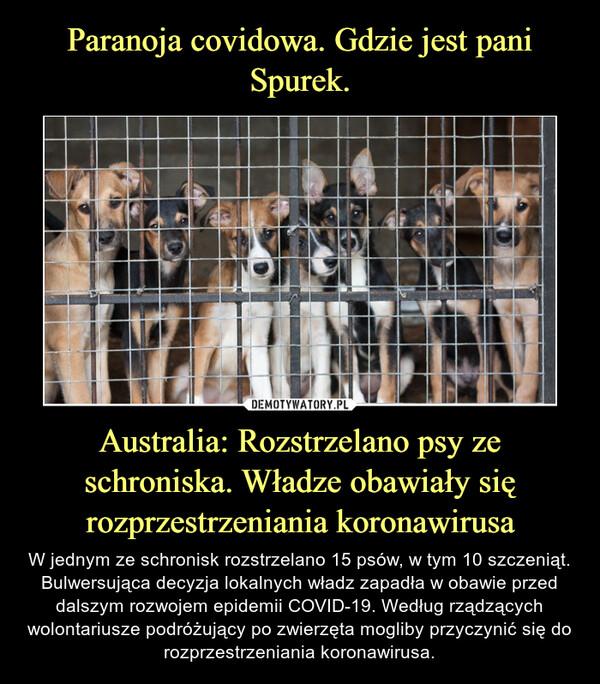 Australia: Rozstrzelano psy ze schroniska. Władze obawiały się rozprzestrzeniania koronawirusa – W jednym ze schronisk rozstrzelano 15 psów, w tym 10 szczeniąt. Bulwersująca decyzja lokalnych władz zapadła w obawie przed dalszym rozwojem epidemii COVID-19. Według rządzących wolontariusze podróżujący po zwierzęta mogliby przyczynić się do rozprzestrzeniania koronawirusa.