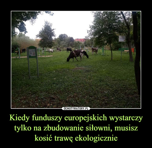 Kiedy funduszy europejskich wystarczy tylko na zbudowanie siłowni, musisz kosić trawę ekologicznie