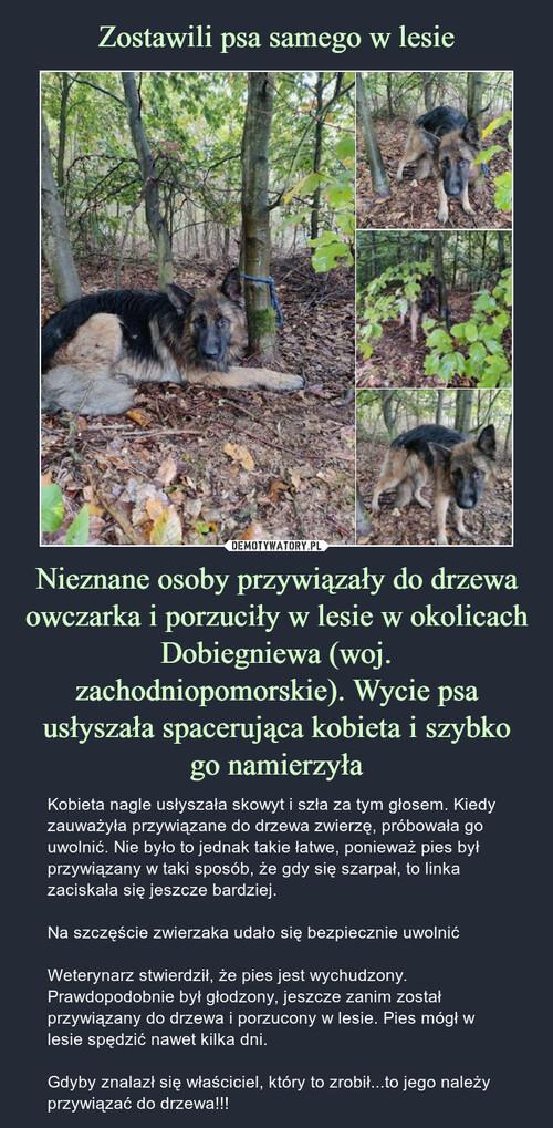 Zostawili psa samego w lesie Nieznane osoby przywiązały do drzewa owczarka i porzuciły w lesie w okolicach Dobiegniewa (woj. zachodniopomorskie). Wycie psa usłyszała spacerująca kobieta i szybko go namierzyła